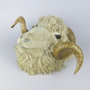 Sheep head, with horns