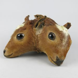 Two-headed Calf