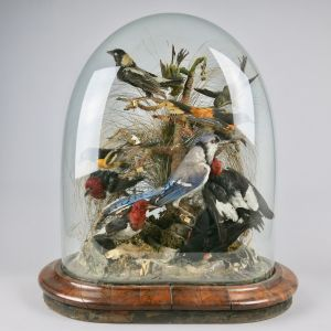 Glass dome of tropical birds 1