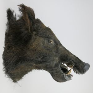 Wild Boar (antique)
