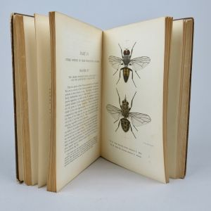 Book, 'House Fly'