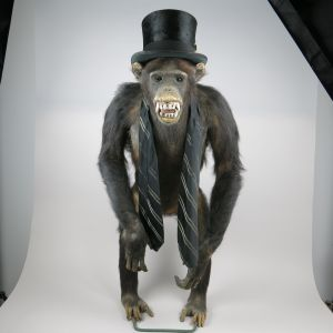 Chimpanzee in top hat