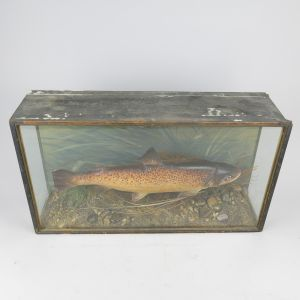 Cased Trout