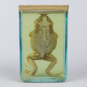 Pickled Toad