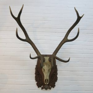 Stag Antlers (B)