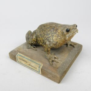 Toad on base (antique)