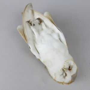 Barn Owl, as 'dead' 1