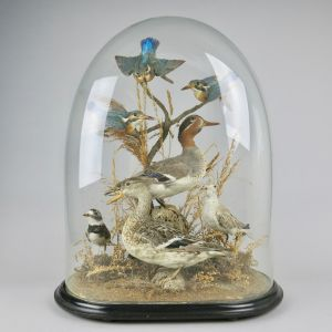 Glass dome of British birds