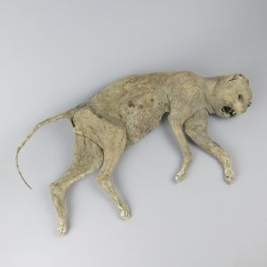 Mummified Cat 2