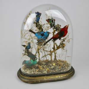 Glass dome of tropical birds 3
