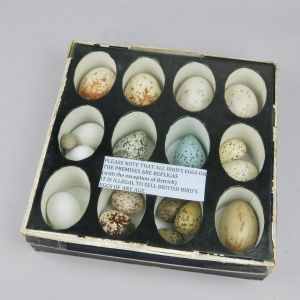 Replica bird eggs