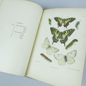 Book, butterflies
