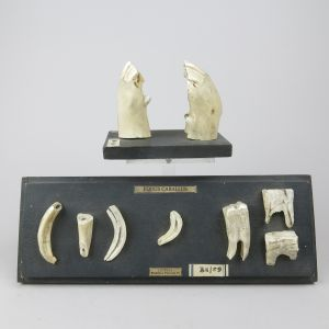 Horse jaw/teeth