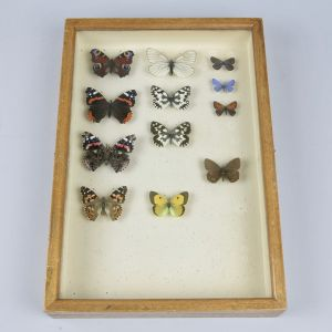 Cased butterflies, vintage