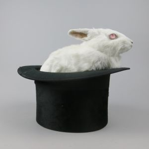 Albino rabbit (in top hat)