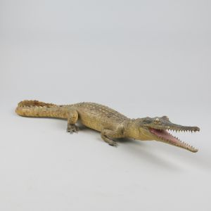 Small crocodile 2