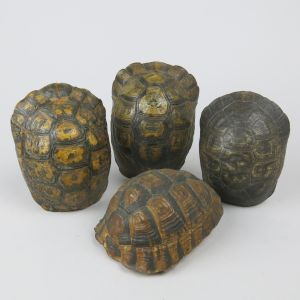 Tortoise shells x 4 (small)
