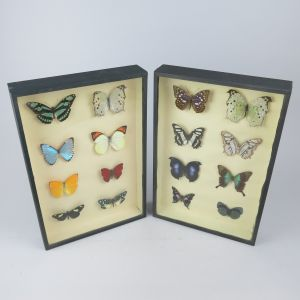 Framed butterfly displays x 2 (portrait)