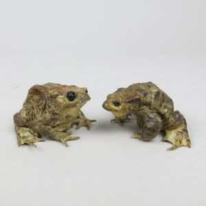 Common Toads 5 & 6