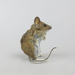 Mouse 3
