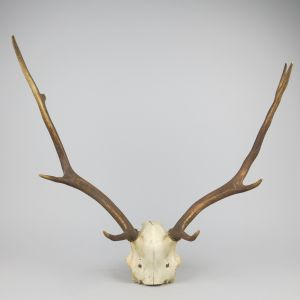 Antlers (no.13)