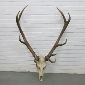Antlers (no.14)