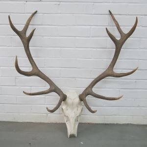 Antlers (no.4)