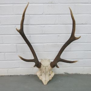 Antlers (no.10)