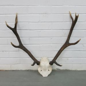 Antlers (no.11)