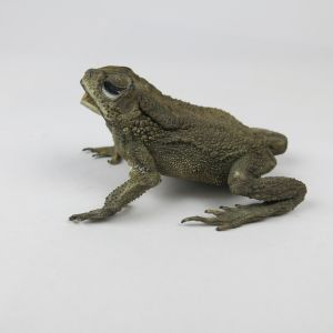 Small Toad (antique)