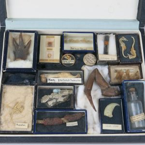Box of curiosities