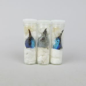 Tropical bird heads in test tubes