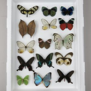 butterfly selection / reduced price